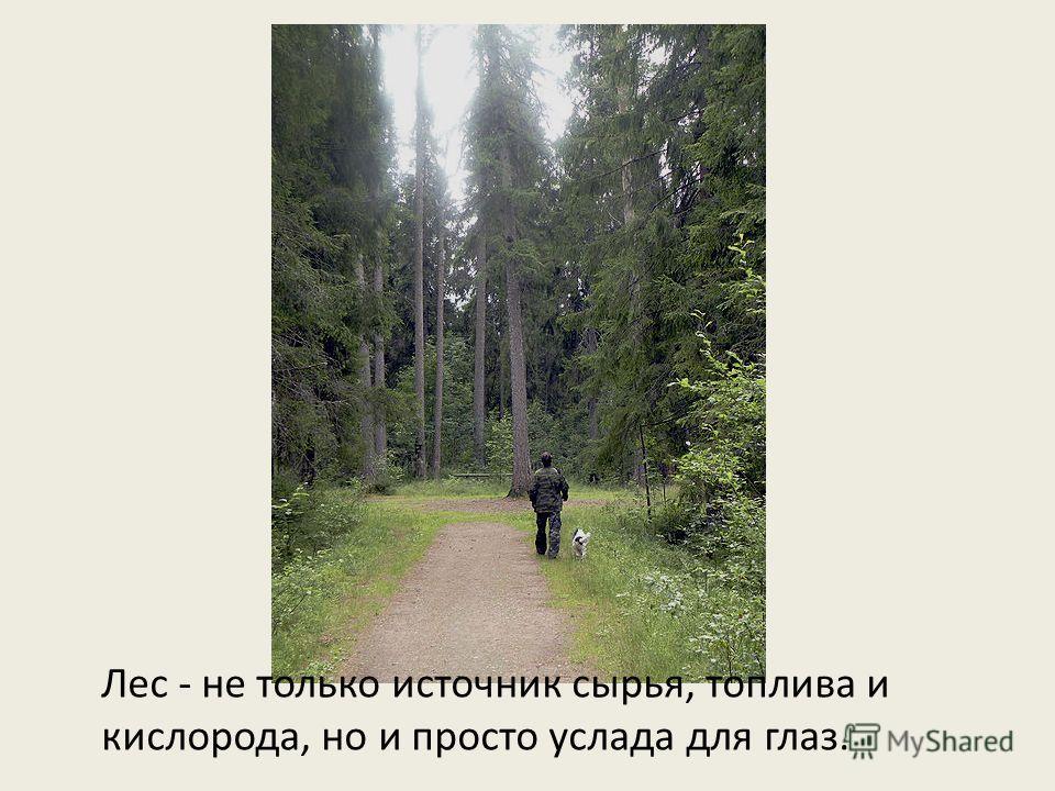 Лес - не только источник сырья, топлива и кислорода, но и просто услада для глаз.