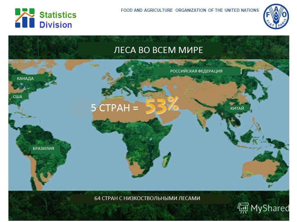 FOOD AND AGRICULTURE ORGANIZATION OF THE UNITED NATIONS Statistics Division