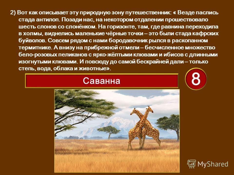 2) Вот как описывает эту природную зону путешественник: « Везде паслись стада антилоп. Позади нас, на некотором отдалении прошествовало шесть слонов со слонёнком. На горизонте, там, где равнина переходила в холмы, виднелись маленькие чёрные точки – э