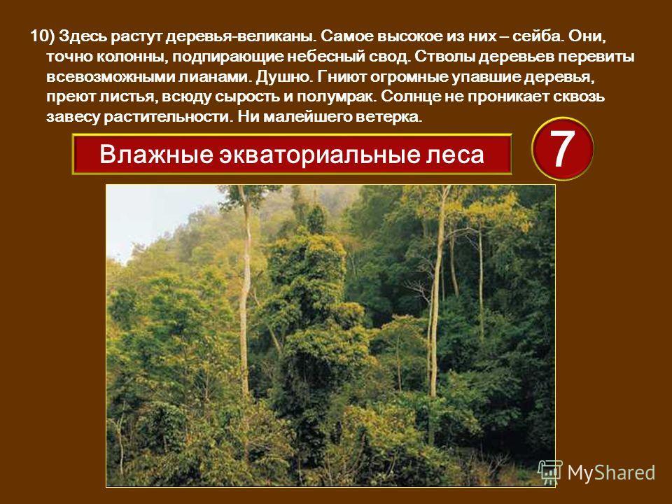 10) Здесь растут деревья-великаны. Самое высокое из них – сейба. Они, точно колонны, подпирающие небесный свод. Стволы деревьев перевиты всевозможными лианами. Душно. Гниют огромные упавшие деревья, преют листья, всюду сырость и полумрак. Солнце не п