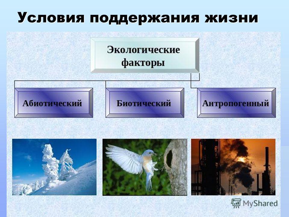 Условия поддержания жизни