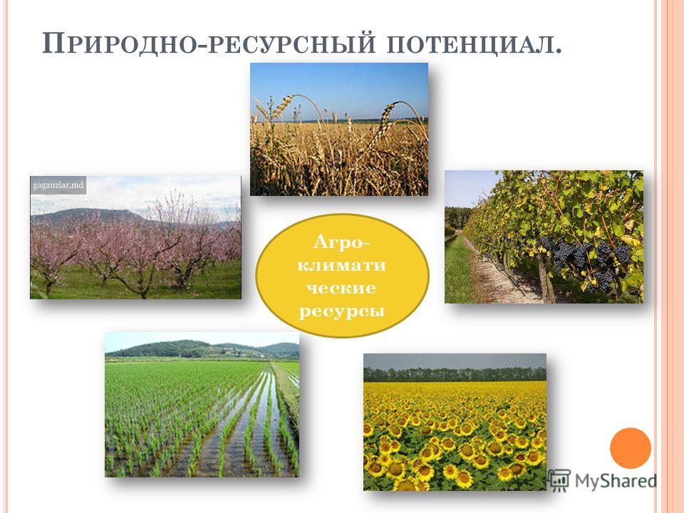 П РИРОДНО - РЕСУРСНЫЙ ПОТЕНЦИАЛ. Агро- климати ческие ресурсы