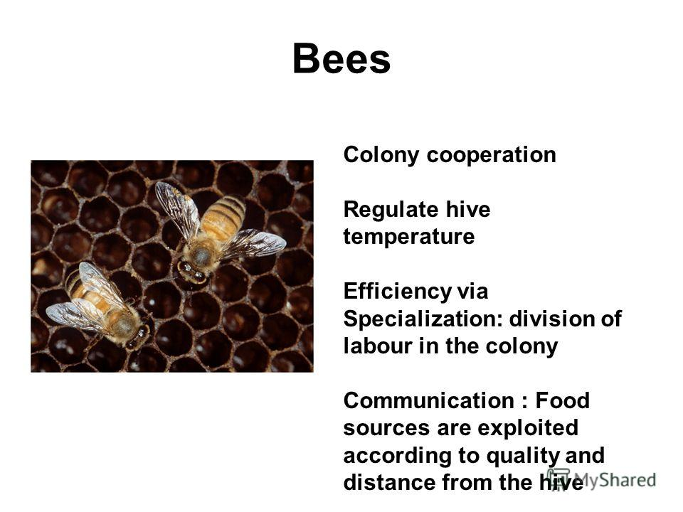 Bees Colony cooperation Regulate hive temperature Efficiency via Specialization: division of labour in the colony Communication : Food sources are exploited according to quality and distance from the hive