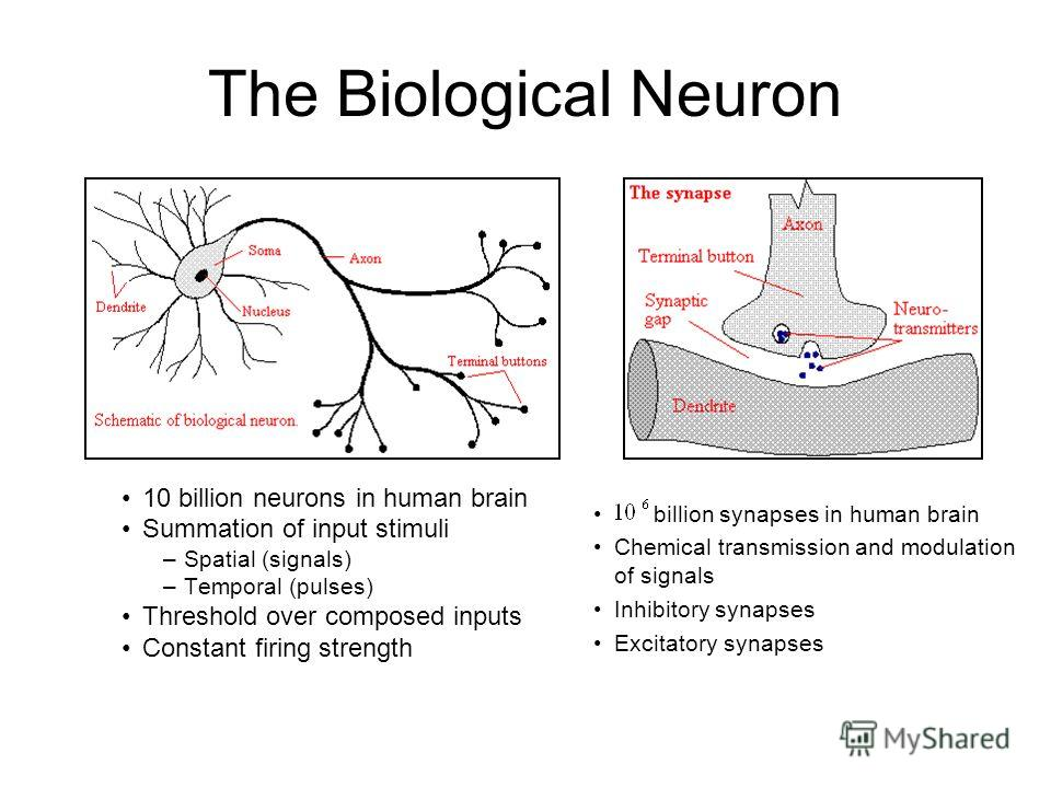 The Biological Neuron 10 billion neurons in human brain Summation of input stimuli –Spatial (signals) –Temporal (pulses) Threshold over composed inputs Constant firing strength billion synapses in human brain Chemical transmission and modulation of s