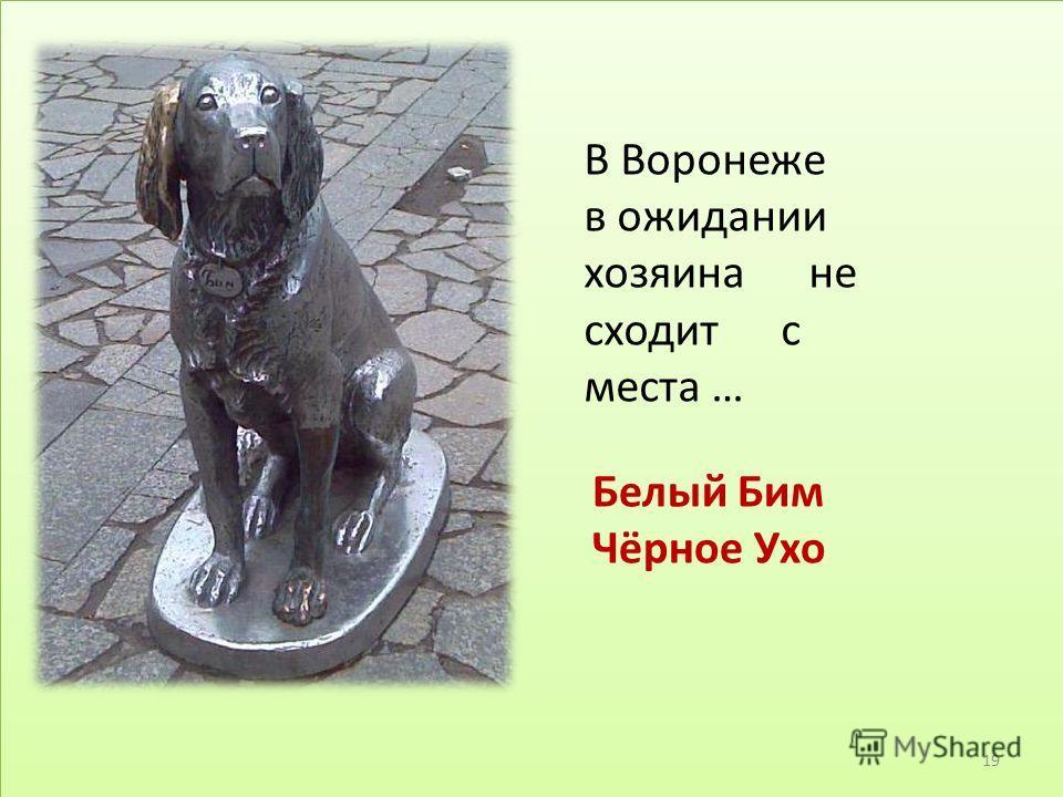 В Воронеже в ожидании хозяина не сходит с места … Белый Бим Чёрное Ухо 19