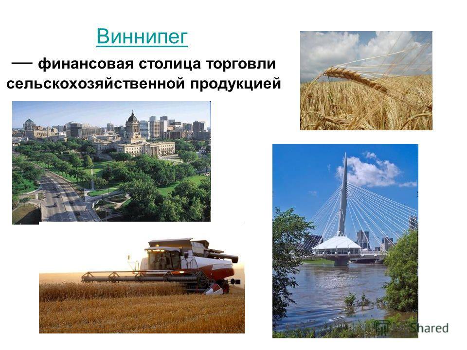Виннипег Виннипег финансовая столица торговли сельскохозяйственной продукцией