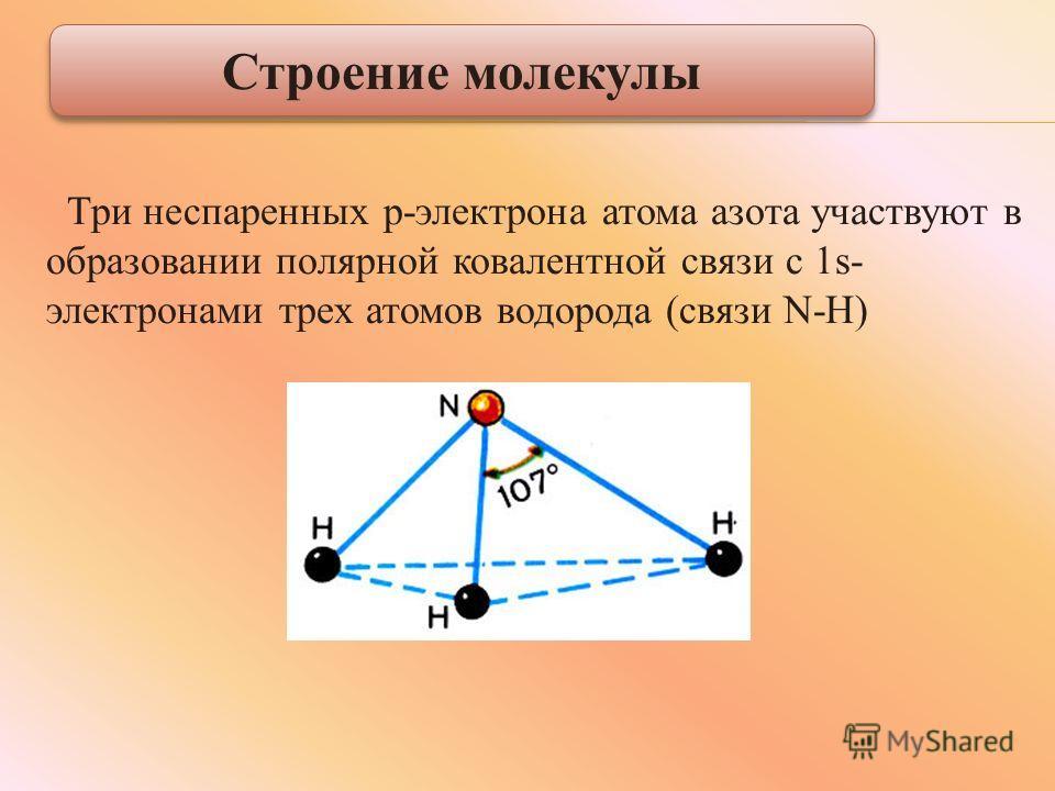 Три неспаренных р-электрона атома азота участвуют в образовании полярной ковалентной связи с 1s- электронами трех атомов водорода (связи N-H) Строение молекулы