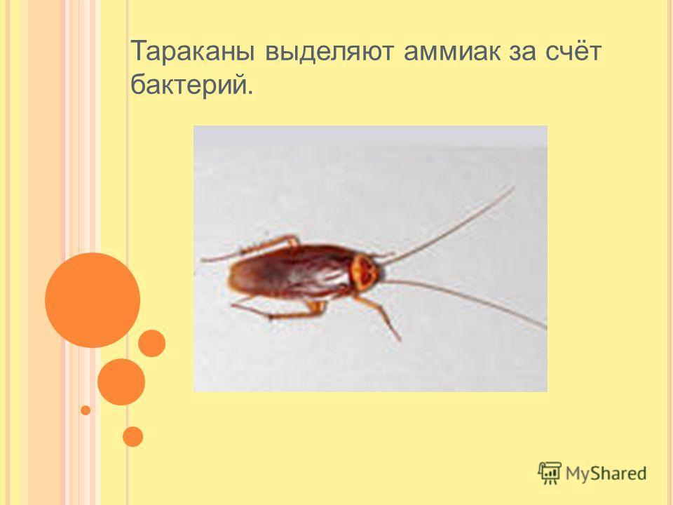 Тараканы выделяют аммиак за счёт бактерий.