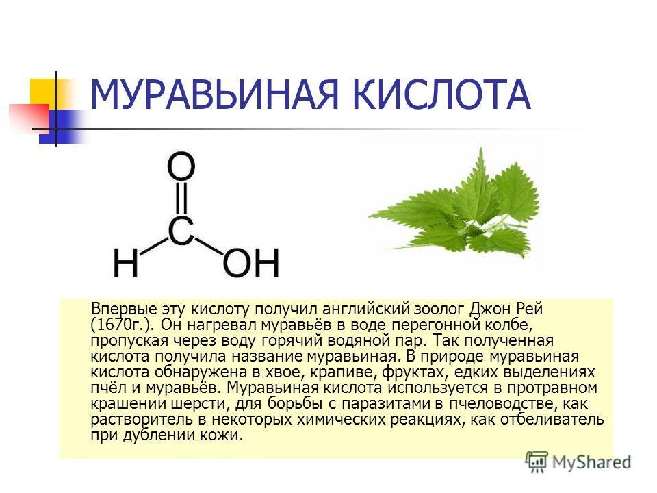 МУРАВЬИНАЯ КИСЛОТА Впервые эту кислоту получил английский зоолог Джон Рей (1670 г.). Он нагревал муравьёв в воде перегонной колбе, пропуская через воду горячий водяной пар. Так полученная кислота получила название муравьиная. В природе муравьиная кис