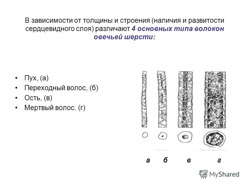 Пух, (а) Переходный волос, (б) Ость, (в) Мертвый волос. (г) В зависимости от толщины и строения (наличия и развитости сердцевидного слоя) различают 4 основных типа волокон овечьей шерсти: а б в г
