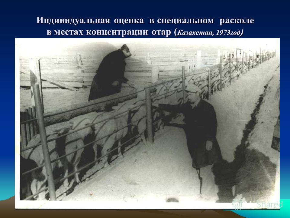Индивидуальная оценка в специальном расколе в местах концентрации отар ( Казахстан, 1973 год )
