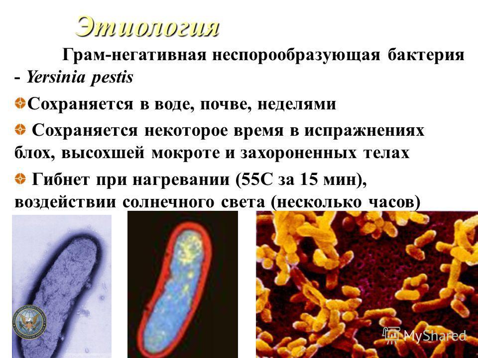 Этиология Грам-негативная неспорообразующая бактерия - Yersinia pestis Сохраняется в воде, почве, неделями Сохраняется некоторое время в испражнениях блох, высохшей мокроте и захороненных телах Гибнет при нагревании (55C за 15 мин), воздействии солне