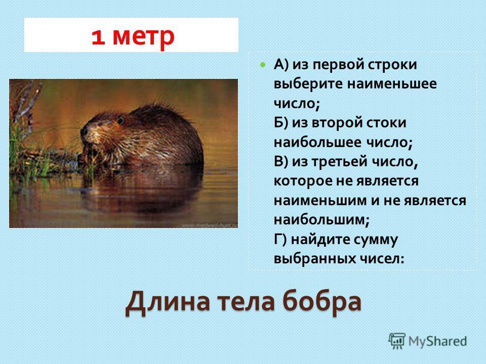 Длина тела бобра 1 метр А ) из первой строки выберите наименьшее число ; Б ) из второй стоки наибольшее число ; В ) из третьей число, которое не является наименьшим и не является наибольшим ; Г ) найдите сумму выбранных чисел :