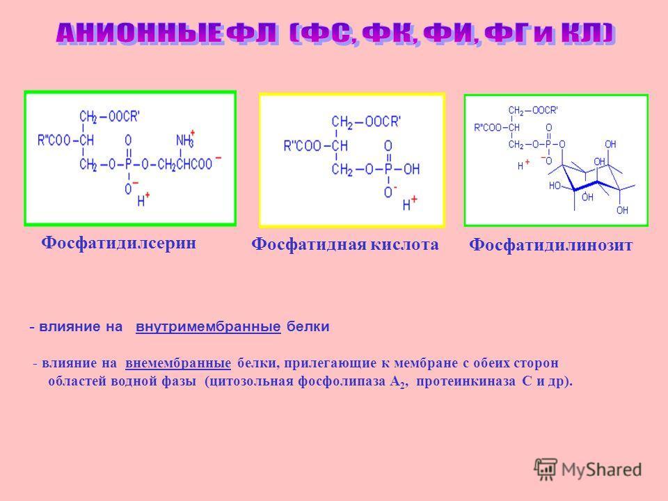 Фосфатидилсерин Фосфатидная кислота Фосфатидилинозит Фосфатидилсерин Фосфатидная кислота Фосфатидилинозит - влияние на внутримембранные белки - влияние на вне мембранные белки, прилегающие к мембране с обеих сторон областей водной фазы (цитозольная ф