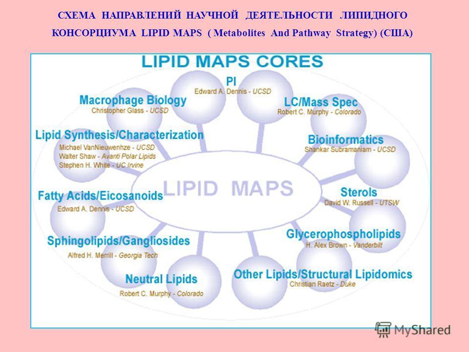 СХЕМА НАПРАВЛЕНИЙ НАУЧНОЙ ДЕЯТЕЛЬНОСТИ ЛИПИДНОГО КОНСОРЦИУМА LIPID MAPS ( Metabolites And Pathway Strategy) (США)