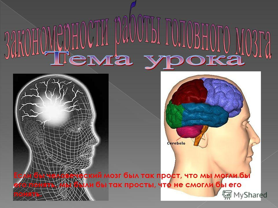 Если бы человеческий мозг был так прост, что мы могли бы его понять, мы были бы так просты, что не смогли бы его понять.