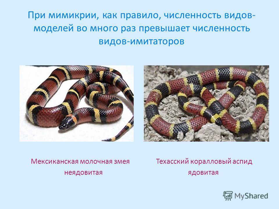 При мимикрии, как правило, численность видов- моделей во много раз превышает численность видов-имитаторов Мексиканская молочная змея Техасский коралловый аспид неядовитая ядовитая