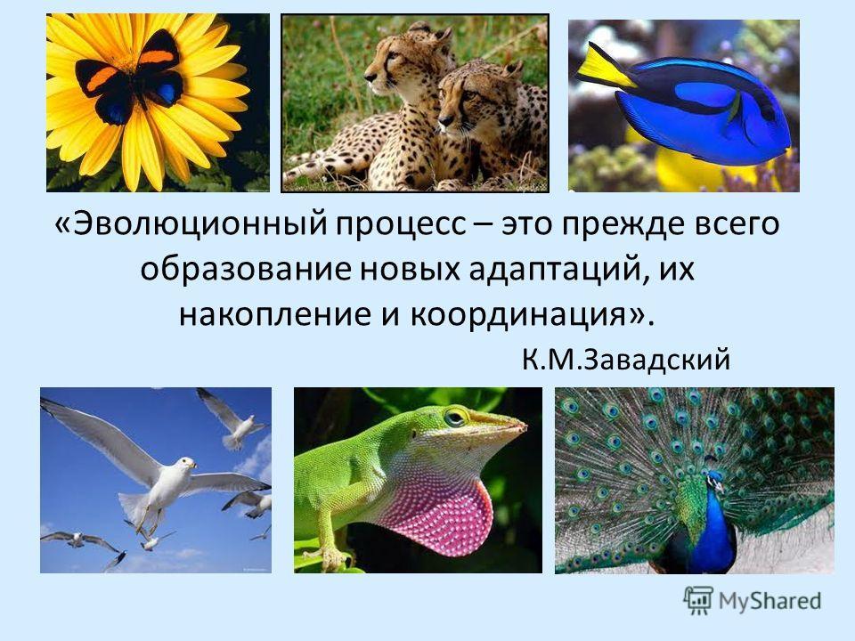 «Эволюционный процесс – это прежде всего образование новых адаптаций, их накопление и координация». К.М.Завадский
