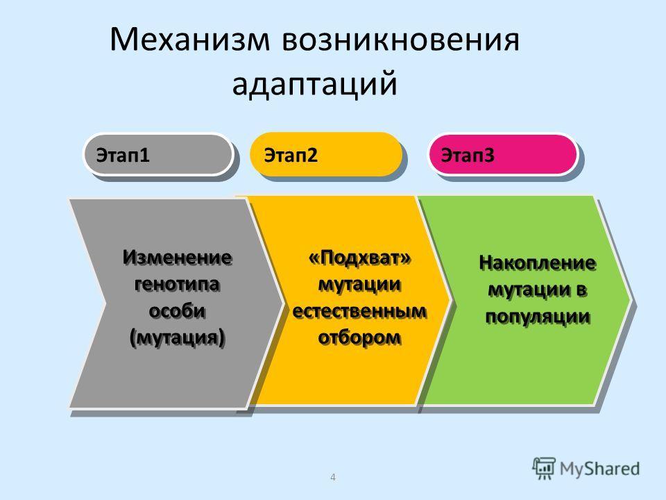 Механизм возникновения адаптаций Этап 1 Этап 3 Этап 2 «Подхват» мутации естественным отбором Накопление мутации в популяции Изменение генотипа особи (мутация) Изменение генотипа особи (мутация) 4