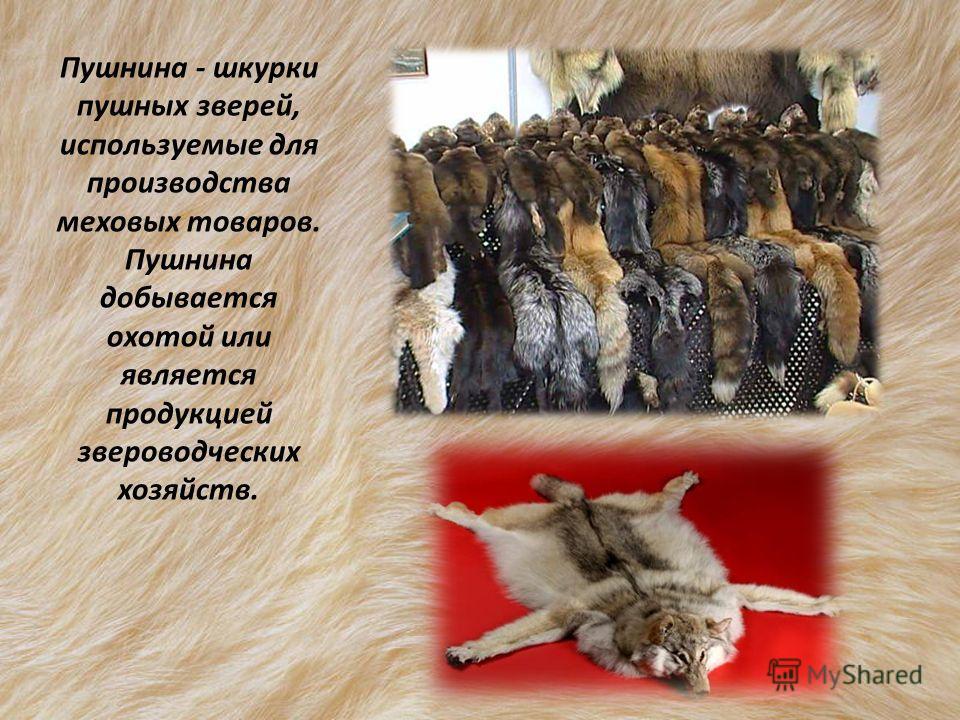 Пушнина - шкурки пушных зверей, используемые для производства меховых товаров. Пушнина добывается охотой или является продукцией звероводческих хозяйств.