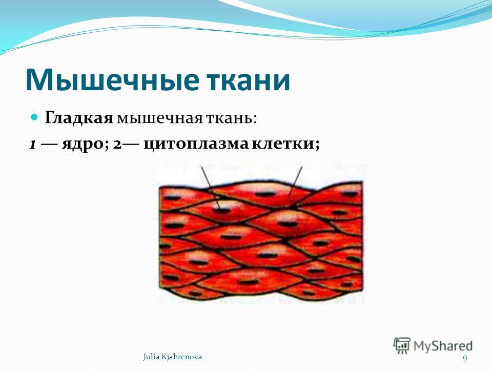 Мышечные ткани Гладкая мышечная ткань: 1 ядро; 2 цитоплазма клетки; Julia Kjahrenova9