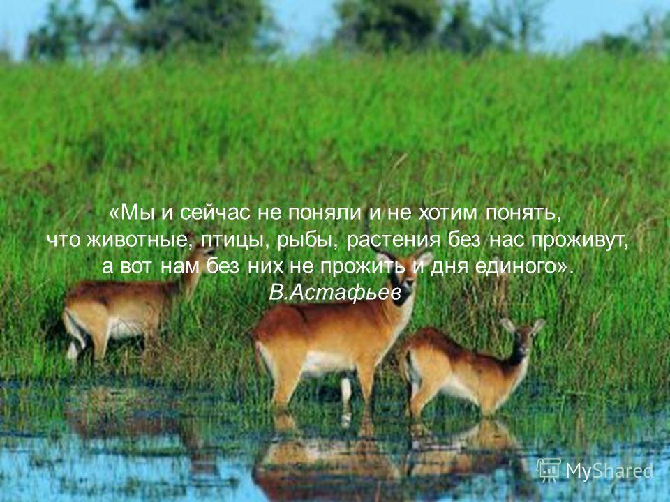 «Мы и сейчас не поняли и не хотим понять, что животные, птицы, рыбы, растения без нас проживут, а вот нам без них не прожить и дня единого». В.Астафьев
