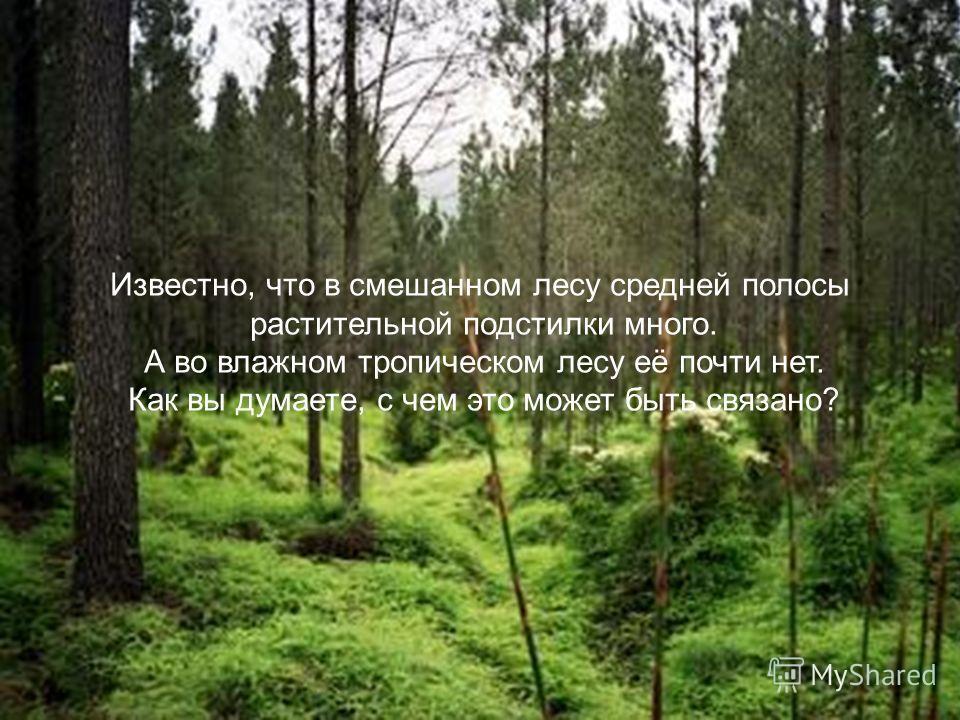 Известно, что в смешанном лесу средней полосы растительной подстилки много. А во влажном тропическом лесу её почти нет. Как вы думаете, с чем это может быть связано?