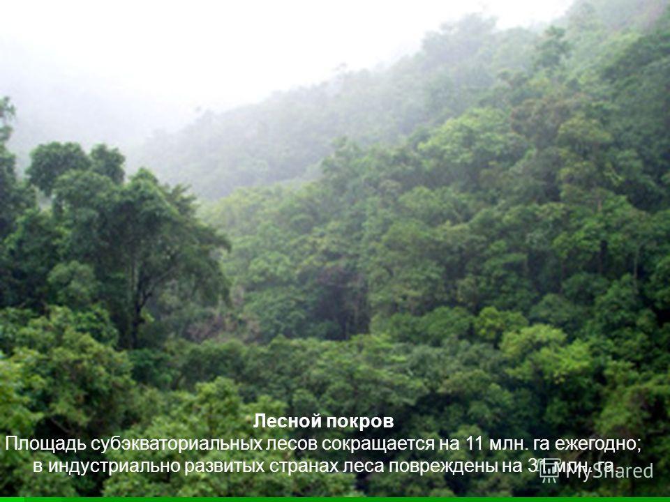 Лесной покров Площадь субэкваториальных лесов сокращается на 11 млн. га ежегодно; в индустриально развитых странах леса повреждены на 31 млн. га.