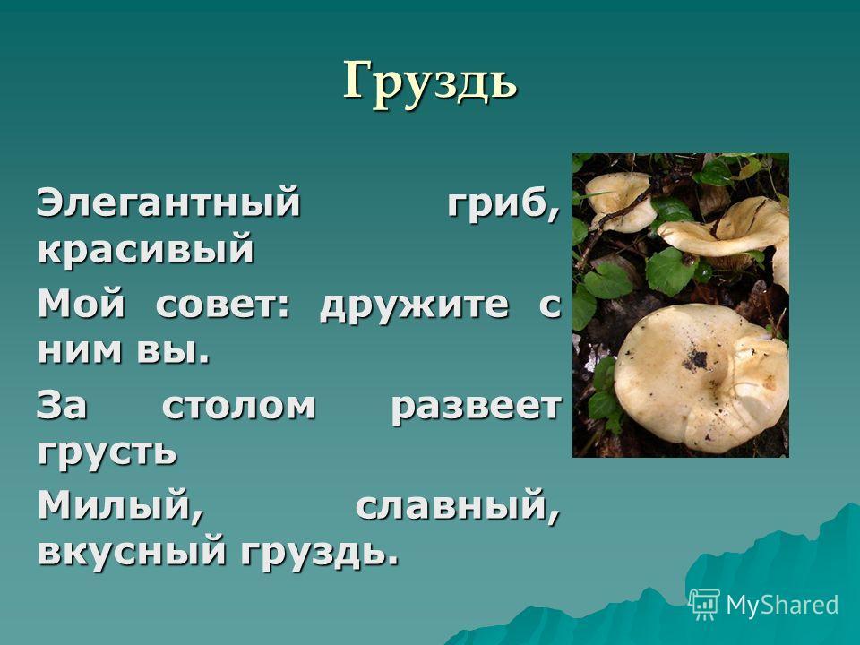 Груздь Элегантный гриб, красивый Мой совет: дружите с ним вы. За столом развеет грусть Милый, славный, вкусный груздь.