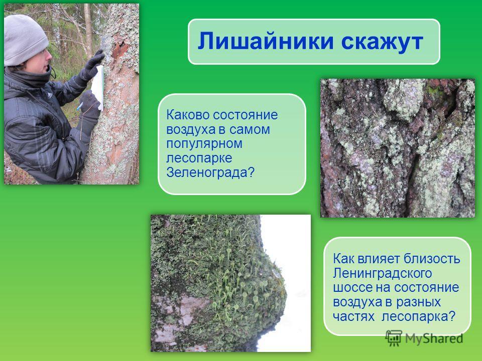 Лишайники скажут Каково состояние воздуха в самом популярном лесопарке Зеленограда? Как влияет близость Ленинградского шоссе на состояние воздуха в разных частях лесопарка?
