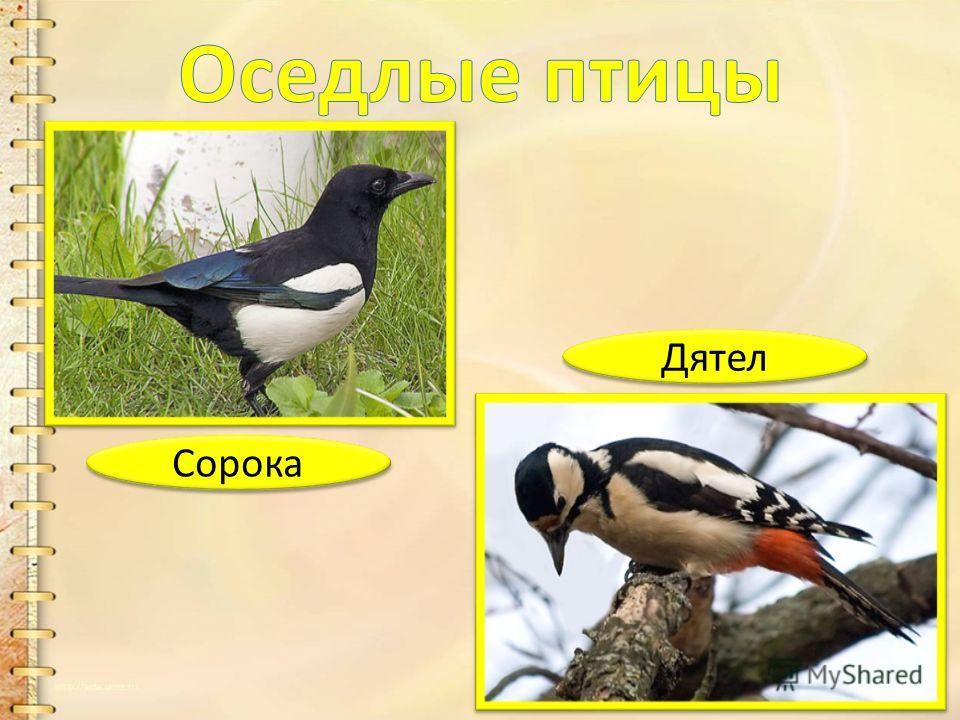 Журавль Утка