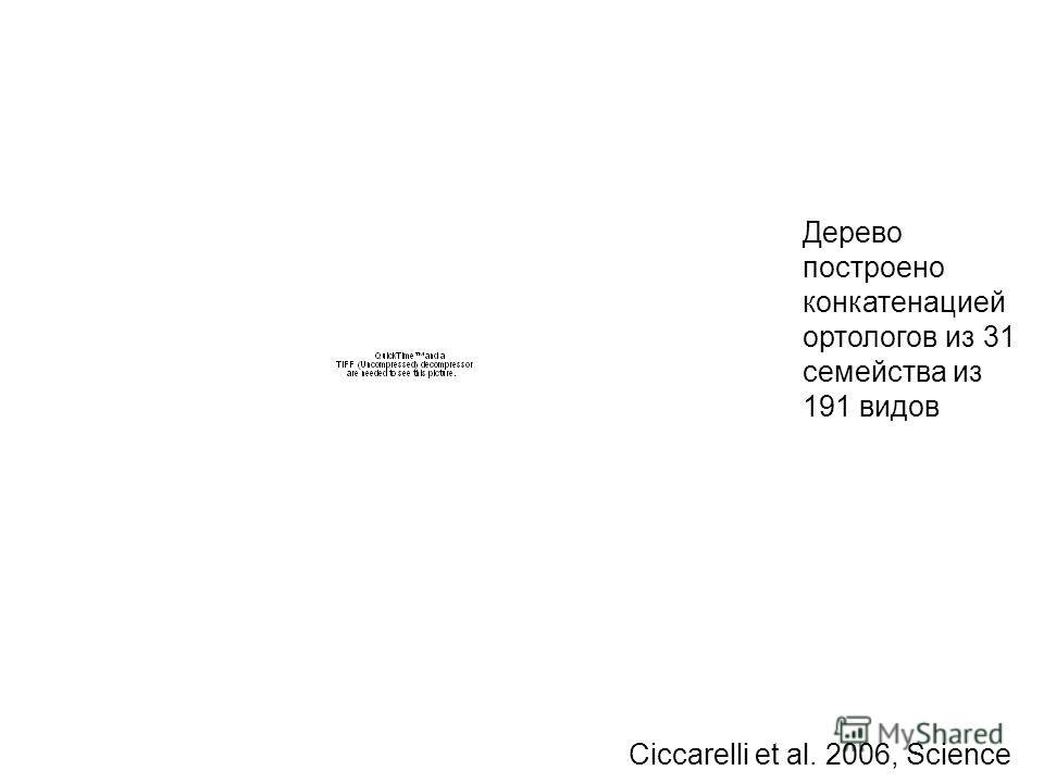 Ciccarelli et al. 2006, Science Дерево построено конкатенацией астрологов из 31 семейства из 191 видов