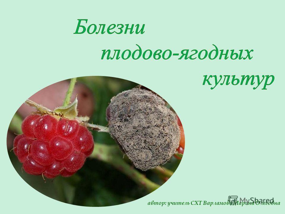 автор: учитель СХТ Варламова Марина Олеговна