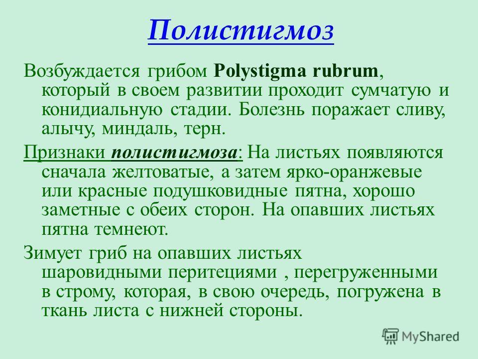 Полистигмоз Возбуждается грибом Polystigma rubrum, который в своем развитии проходит сумчатую и конидиальную стадии. Болезнь поражает сливу, алычу, миндаль, терн. Признаки полистигмоза: На листьях появляются сначала желтоватые, а затем ярко-оранжевые