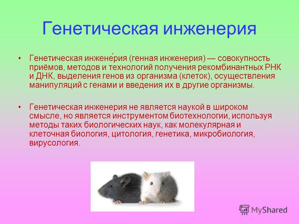 Генетическая инженерриа Автор: Васильев Антон 7 в класс.