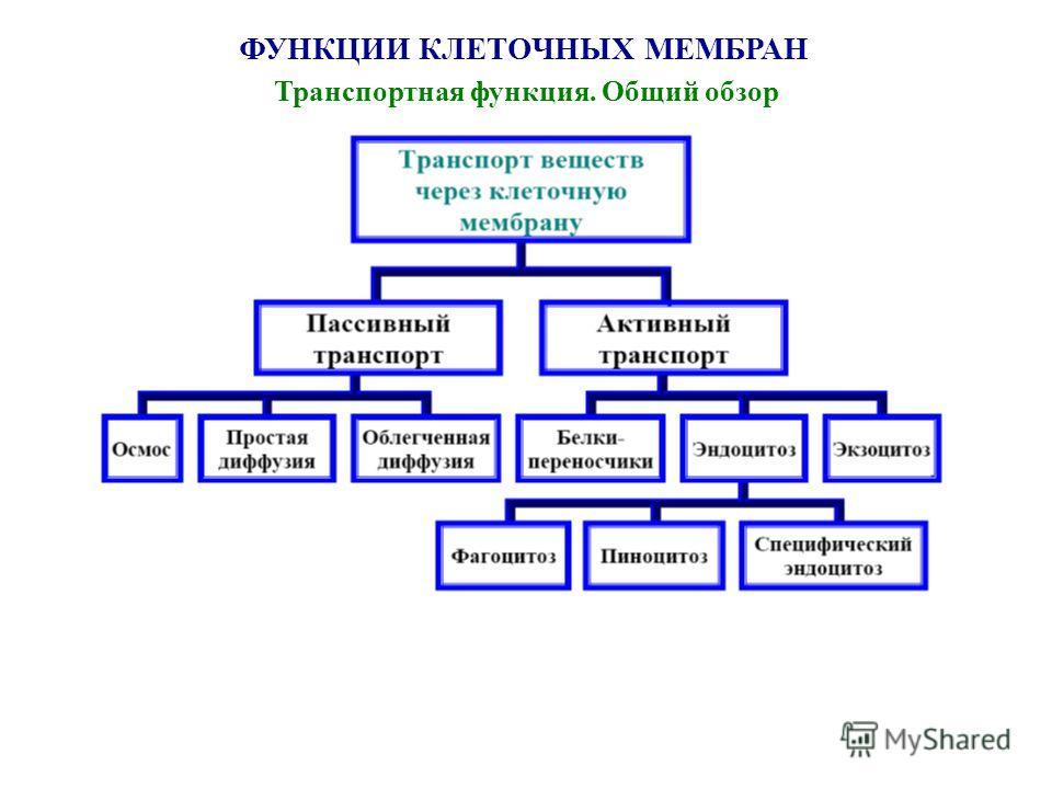 ФУНКЦИИ КЛЕТОЧНЫХ МЕМБРАН Транспортная функция. Общий обзор