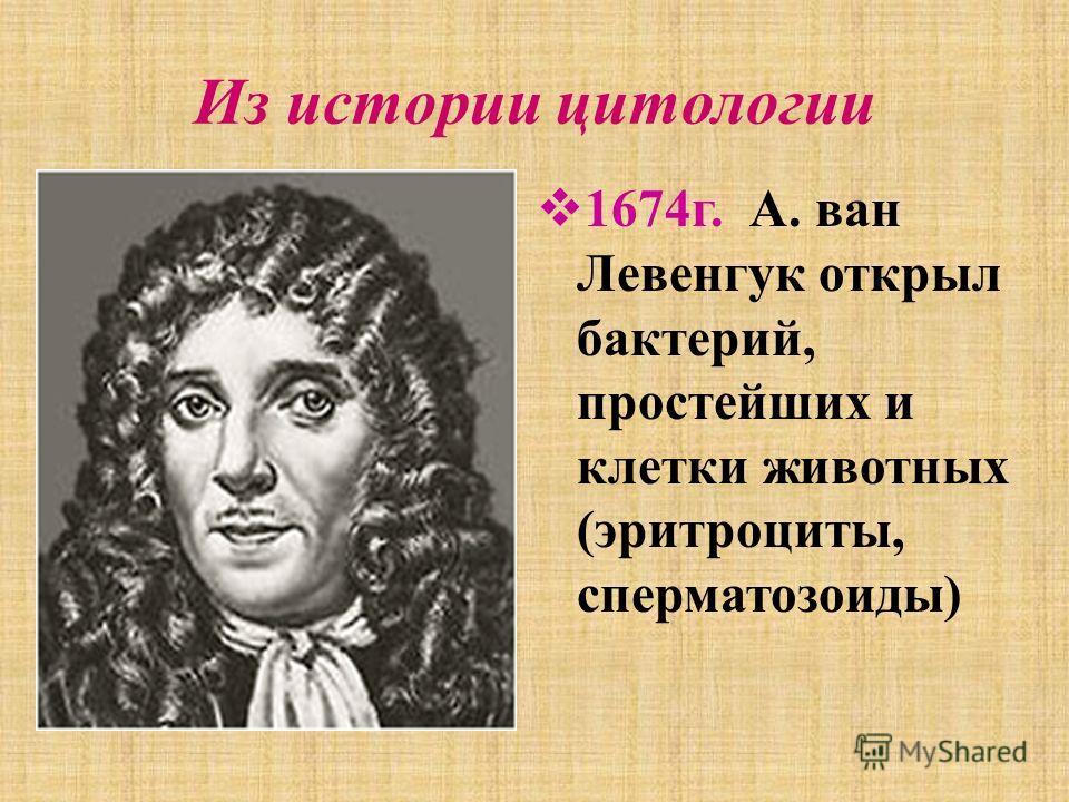 Из истории цитологии 1674 г. А. ван Левенгук открыл бактерий, простейших и клетки животных (эритроциты, сперматозоиды)
