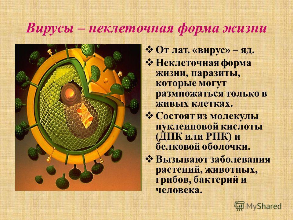 Вирусы – неклеточная форма жизни От лат. «вирус» – яд. Неклеточная форма жизни, паразиты, которые могут размножаться только в живых клетках. Состоят из молекулы нуклеиновой кислоты (ДНК или РНК) и белковой оболочки. Вызывают заболевания растений, жив