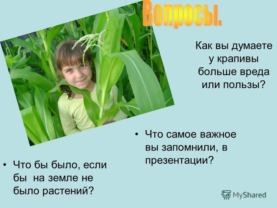 Как вы думаете у крапивы больше вреда или пользы? Что бы было, если бы на земле не было растений? Что самое важное вы запомнили, в презентации?