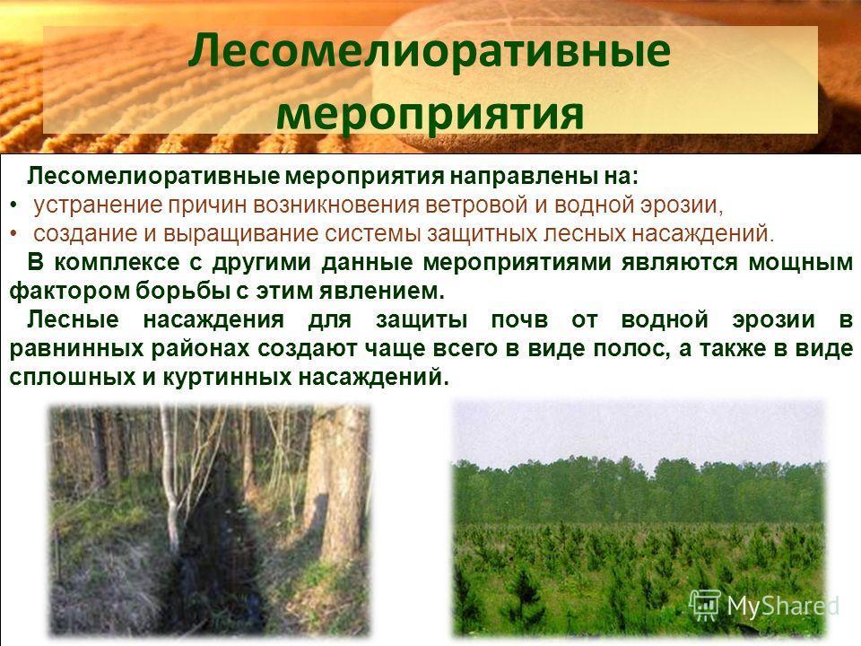 Лесомелиоративные мероприятия Лесомелиоративные мероприятия направлены на: устранение причин возникновения ветровой и водной эрозии, создание и выращивание системы защитных лесных насаждений. В комплексе с другими данные мероприятиями являются мощным