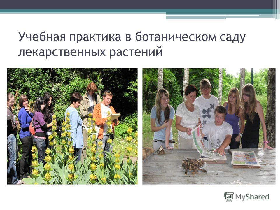 Учебная практика в ботаническом саду лекарственных растений