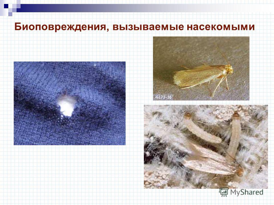 Биоповреждения, вызываемые насекомыми