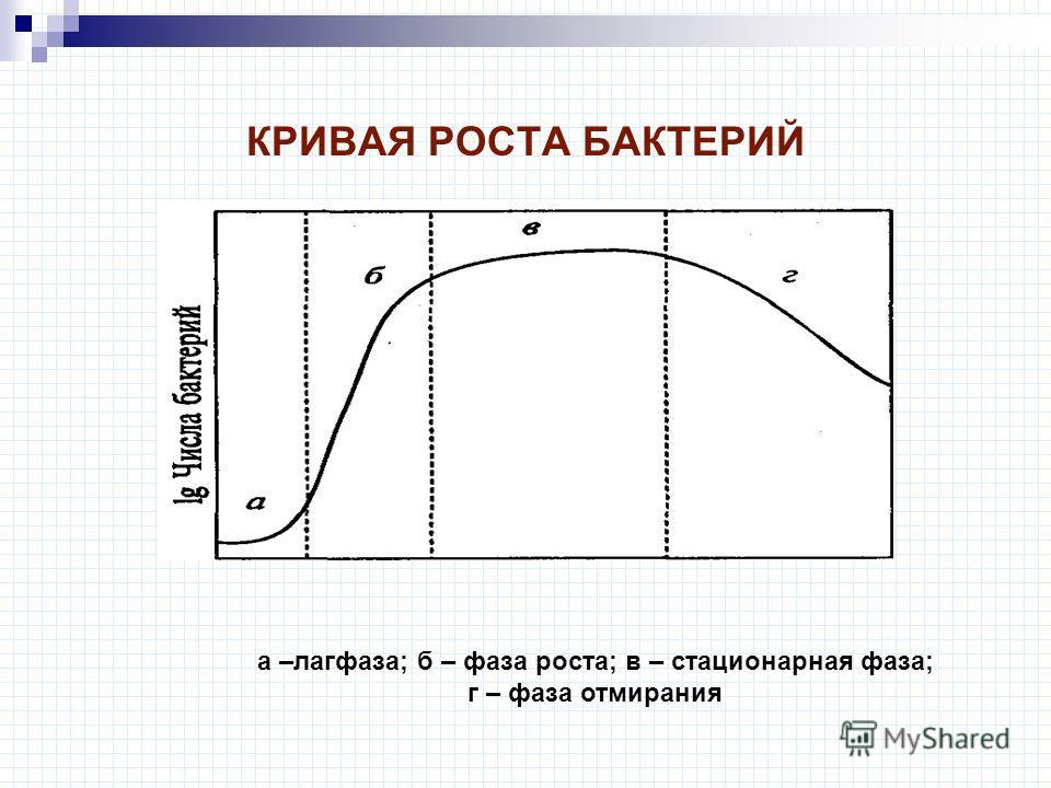 КРИВАЯ РОСТА БАКТЕРИЙ а –лагфаза; б – фаза роста; в – стационарная фаза; г – фаза отмирания