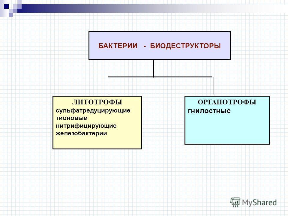 ЛИТОТРОФЫ сульфатредуцирующие тионовые нитрифицирующие железобактерии ОРГАНОТРОФЫ гнилостные БАКТЕРИИ - БИОДЕСТРУКТОРЫ