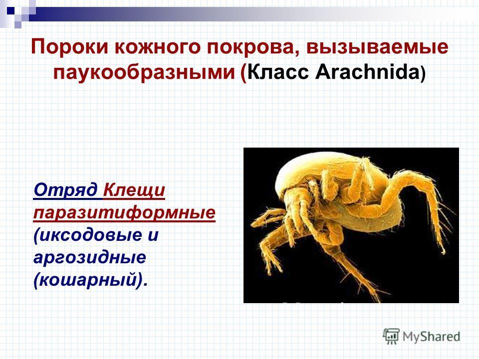 Пороки кожного покрова, вызываемые паукообразными (Класс Arachnida ) Отряд Клещи паразитиформные (иксодовые и аргозидные (кошарный).