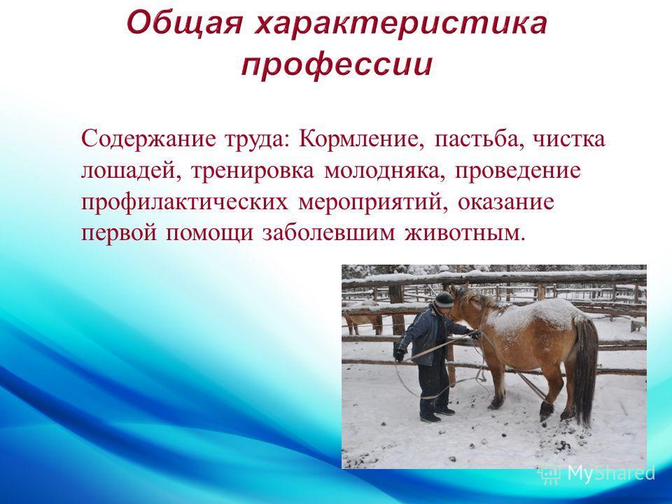 Содержание труда : Кормление, пастьба, чистка лошадей, тренировка молодняка, проведение профилактических мероприятий, оказание первой помощи заболевшим животным.