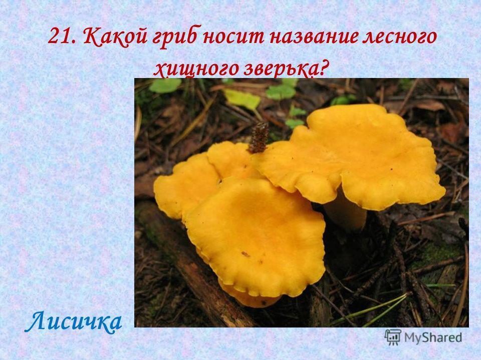 21. Какой гриб носит название лесного хищного зверька? Лисичка