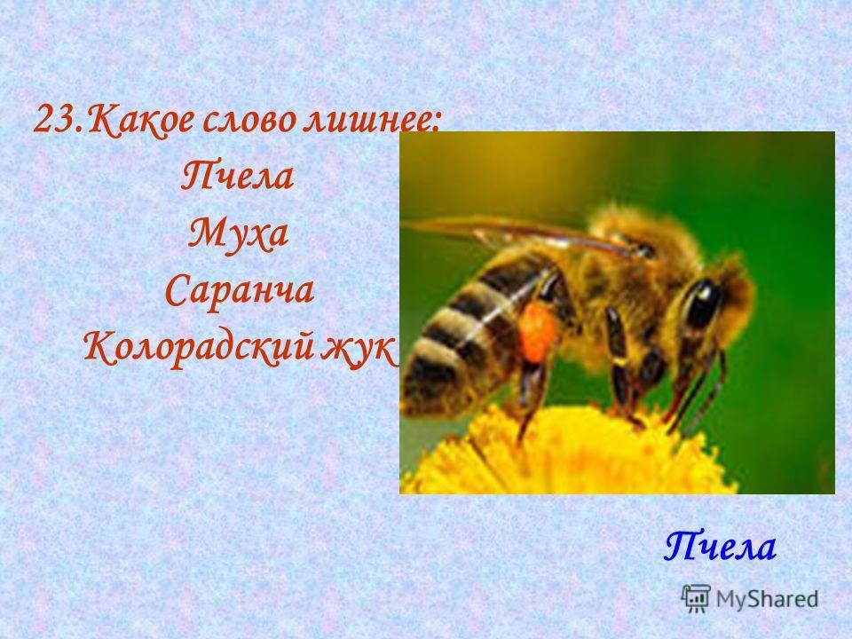23. Какое слово лишнее: Пчела Муха Саранча Колорадский жук Пчела