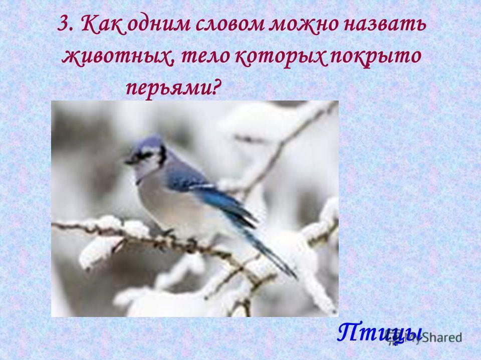 3. Как одним словом можно назвать животных, тело которых покрыто перьями? Птицы
