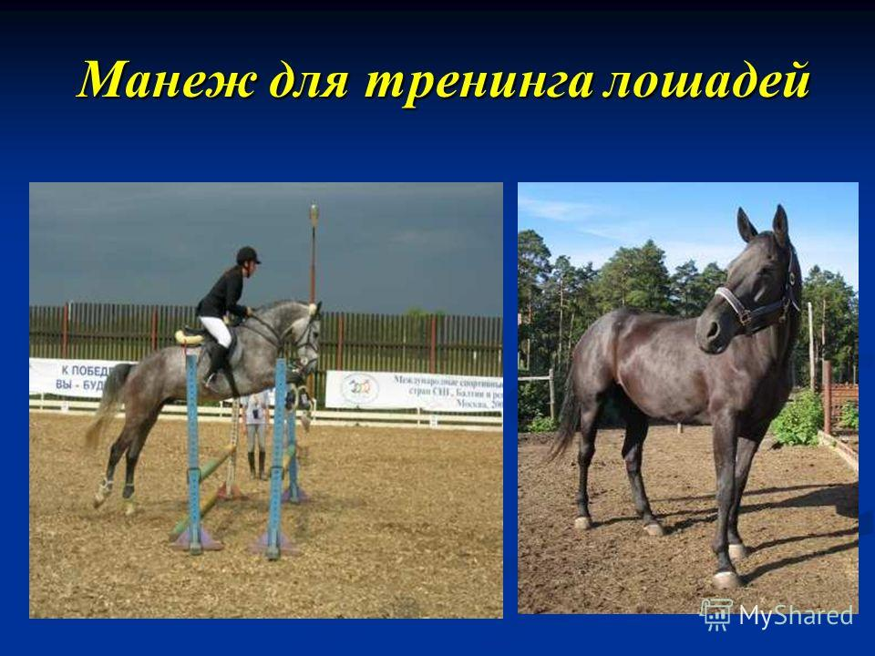 Манеж для тренинга лошадей